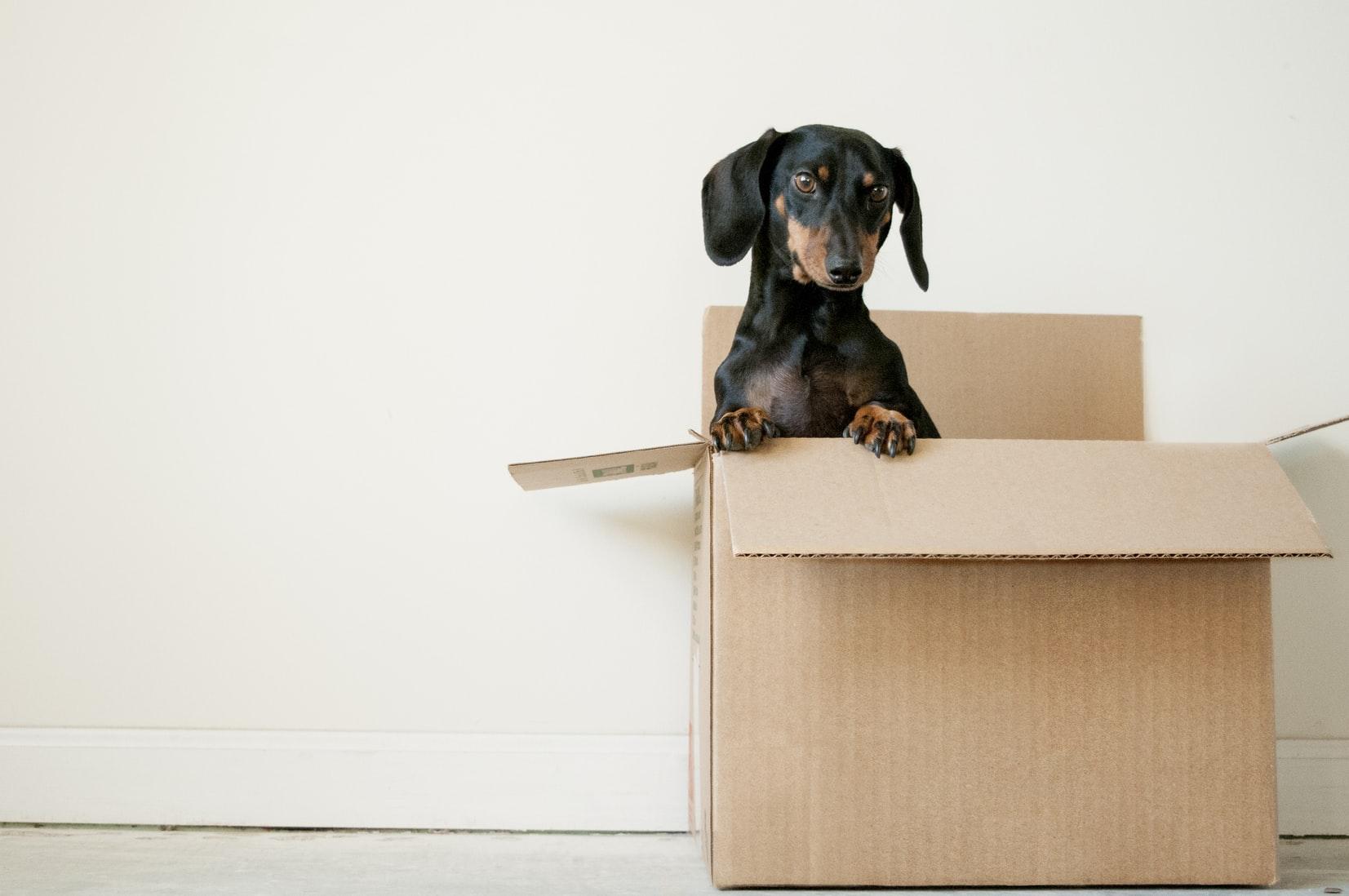 Dropbox - Dog in a Box